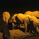 apéro des éléphants