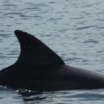 Photo of Dolphin Bay Preserve