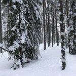 Zdjęcie Luleå  Adventure Hundspann