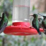 visited the hummingbird garden