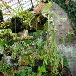 Photo of Bogor Botanical Gardens