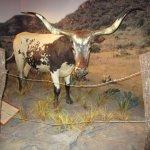 longhorn!