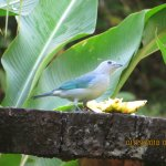 Bird at the feeder