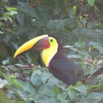 Toucan at one of the many small beaches