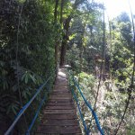 Canopy Safari Foto
