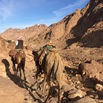 Sinai Safari Adventures Foto