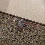 Mould growing in the carpet