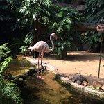 Photo of National Zoological Gardens of Sri Lanka
