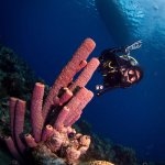 Foto de Bas Harts Diving Curacao