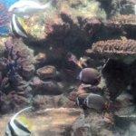 Foto de Phuket Aquarium