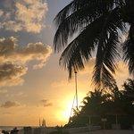 Foto de Bougainvillea Barbados