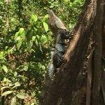 Photo of Hotel Flying Crocodile