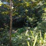 Photo of Narrows Escape Rainforest Retreat