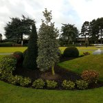 Sculptured shrubs