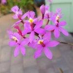 Orchidee im Garten