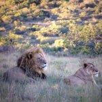普馬巴私人野生動物保護區飯店照片