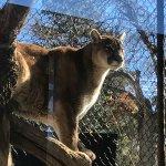 Foto de Big Bear Alpine Zoo at Moonridge
