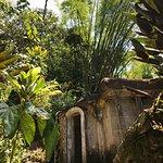 Фотография Edward James sculptor garden, Las Pozas