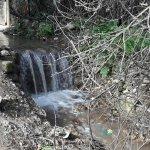 בריכת מים טבעיים ממעיין נובע