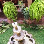 Courtyard and garden with Quetzal Tail plants