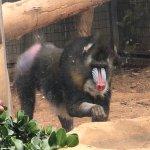 Photo de Pafos Zoo