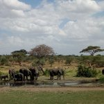 water is life,look how does nature provides life to these elephats in Serengeti#ijue