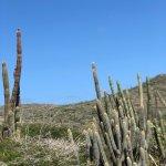 Photo de De Palm Tours