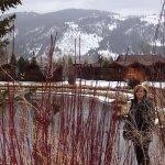 Photo de Rustic Inn Creekside Resort and Spa at Jackson Hole