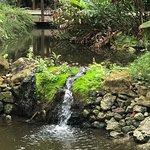 Koi pond/walking path bridge