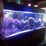 bar fish tank