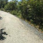 Path on Nugget Falls Trail
