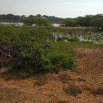 Bundala National Park Foto