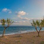 Oasis Scala Beach Hotel Bild