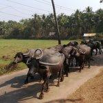 Photo de Alila Diwa Goa