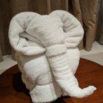 The elephant towel