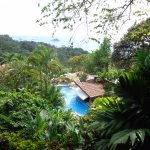 Pool Surrounded by Jungle