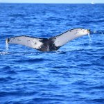 One of many whales seen on the excursion!