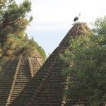 Photo de Jardin Zoologique National de Rabat