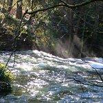 Bild från Whatcom Falls Park