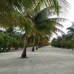 Playa del Hotel Paradise
