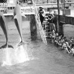 Foto de Dolphin Discovery