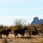 How about joining these cowboys & cowgirls on the next cattle drive? Call us!