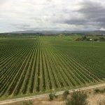 The Vine View