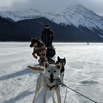 Sled dogs on the pull
