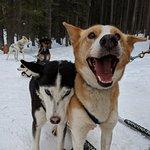 Leader dogs Abra [black] and Uma [tan]