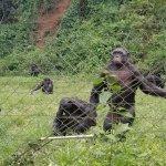 Photo of Lola ya Bonobo