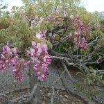 ภาพถ่ายของ Toba Water Environmental Conservation Center