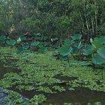 Foto de Tra Su Bird Sanctuary