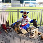 Bring your pup to the ballpark on Wet Nose Wednesday!