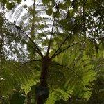 Photo of Sendero Los Quetzales (The Quetzales Trail)